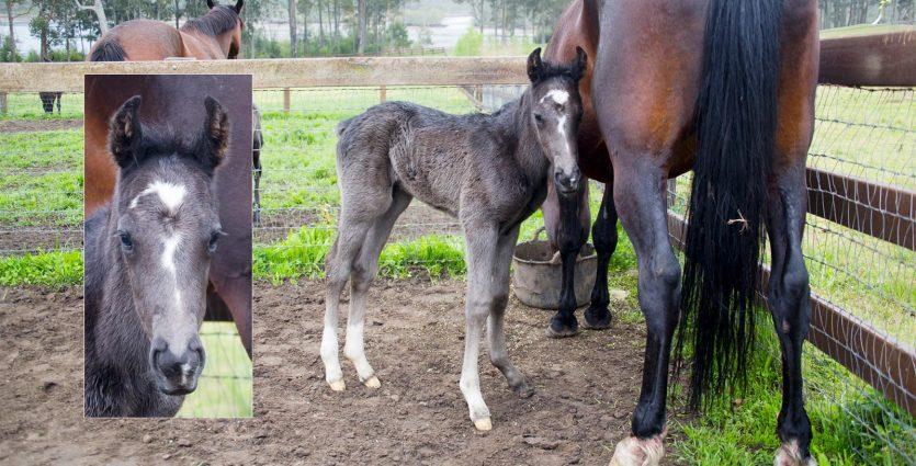 20150922_0015a-Foal7-1960-835x425