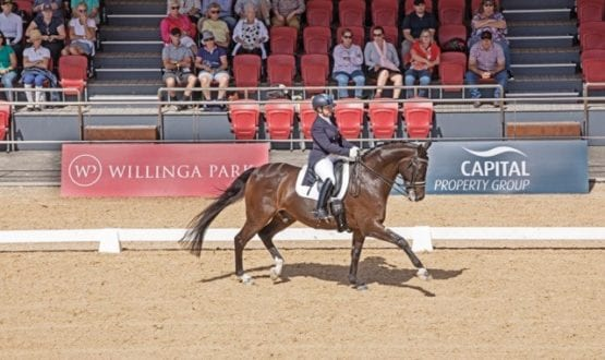 Dressage by the Sea 2019