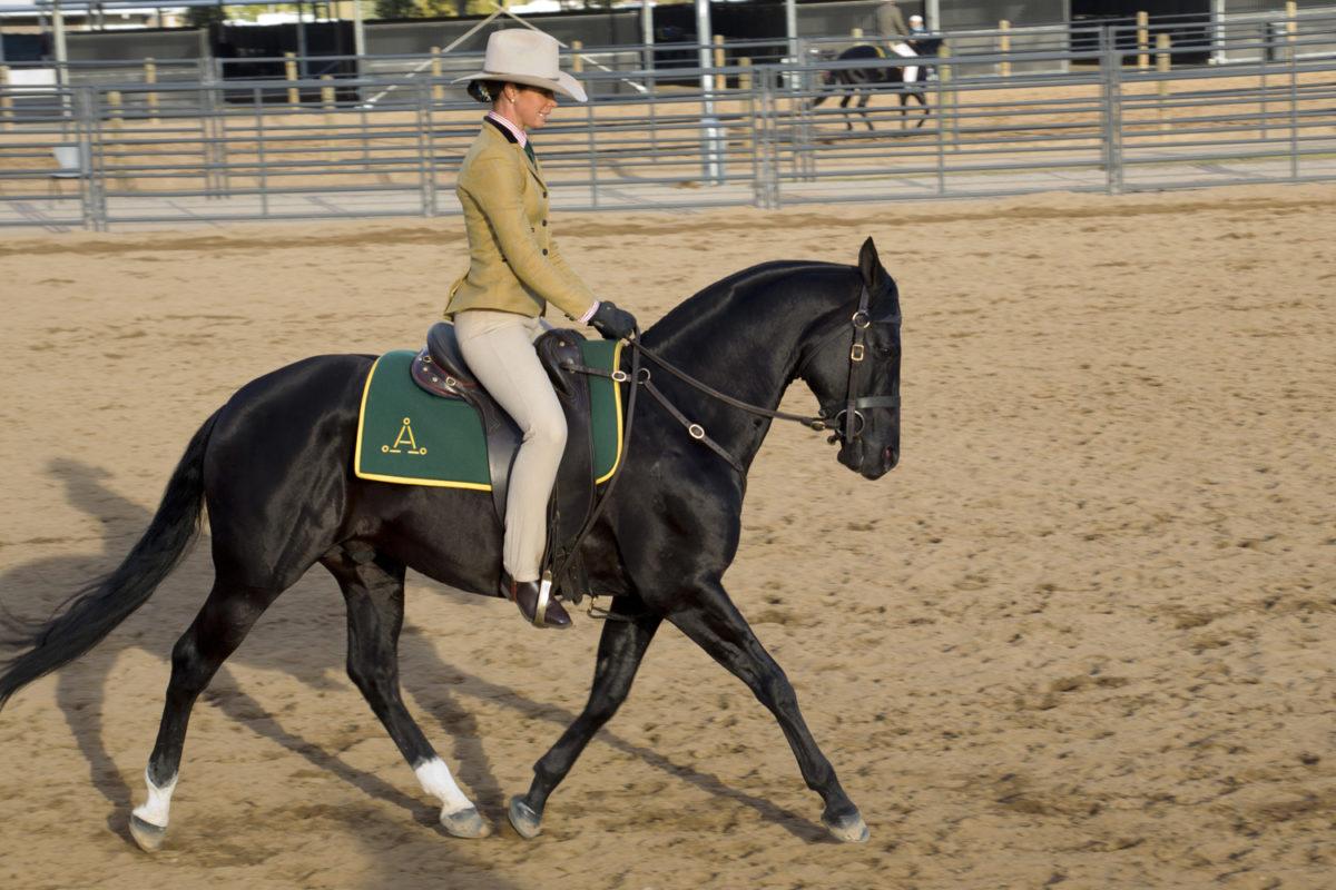 Emma Chief Australian Stock Horse Society National Show