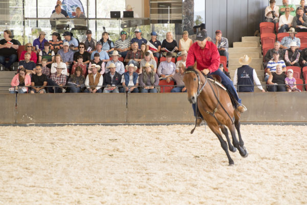 Man riding a horse in front of a crowd