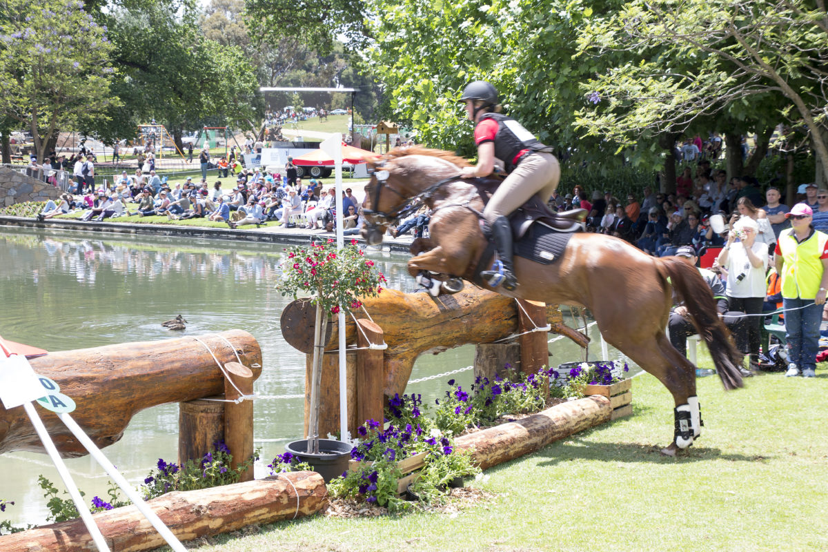 Showjumping horse on eventing course
